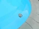 After being out in the scorching sun for most of the day, I need to cool off so I go for a swim. I have an uncommon advantage for a rock in that pumice is the only rock that floats. By being very porous and extremely light in density, I can float in the pool for hours to come.