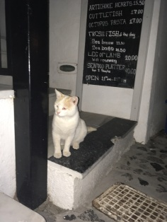 This is my brother Gus. He spends most of his time waiting in the doorways of cafes anticipating, keeping a constant vigilance of the streets, and waiting to fight for fallen scraps of gyros.