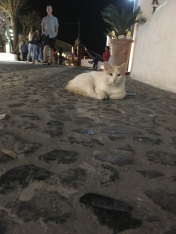 "As far back as I could remember I always wanted to be a stray cat. My name is Vassilissa, although I hear the Fanny Packs call me ""Awww"" , and I'm the luckiest cat on Santorini."